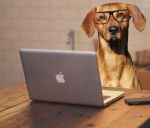 lenses new glasses dog at computer